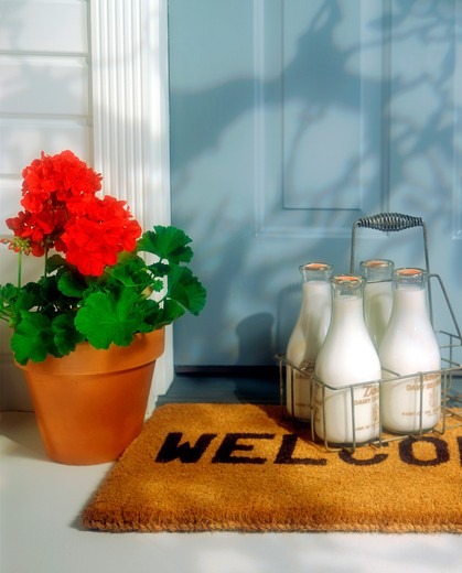 Four glass bottles of milk in a carrier sit on a welcome mat next to a flowering red geraninum at the front door of a house. : Stock Photo