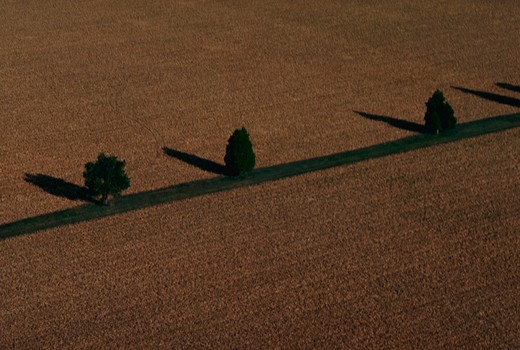 Stock Photo: 4286-21128 Aerial view of trees bordering corn fields on Maryland?s Eastern Shore.