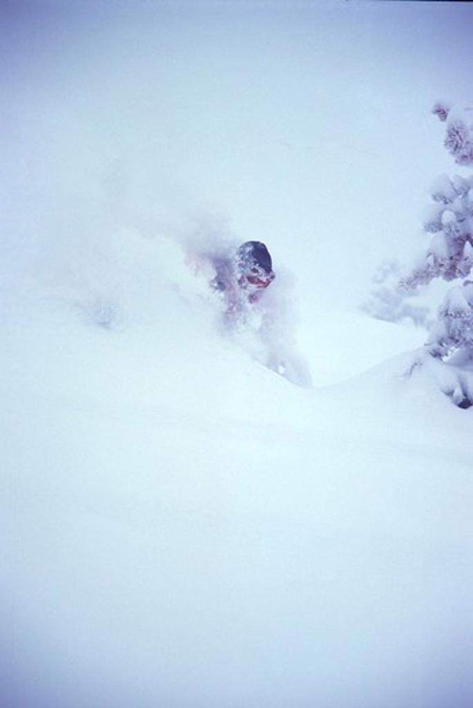 A man skiing powder at Alpine Meadows, CA. : Stock Photo