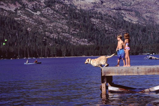 Two kids and a jumping dog on Donner Lake, California. : Stock Photo