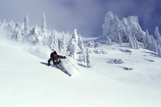 Stock Photo: 4286-22603 A man skiing powder snow at Squaw Valley in California.