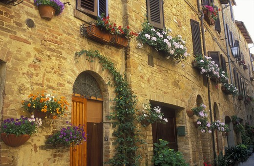 Italy, Pienza, Tuscany, flowerpots and flowers hung along a wall with doorways : Stock Photo