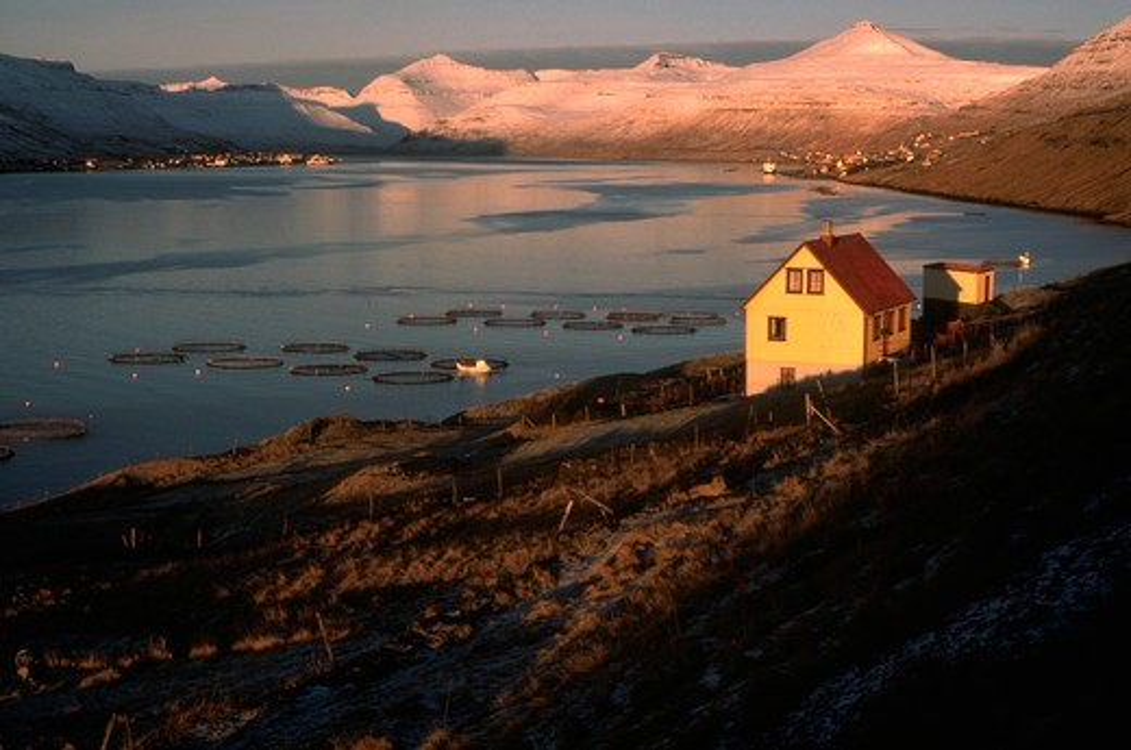 fish farming (Atlantic Salmon), Soldarfjordur, Faroe Islands, Denmark : Stock Photo