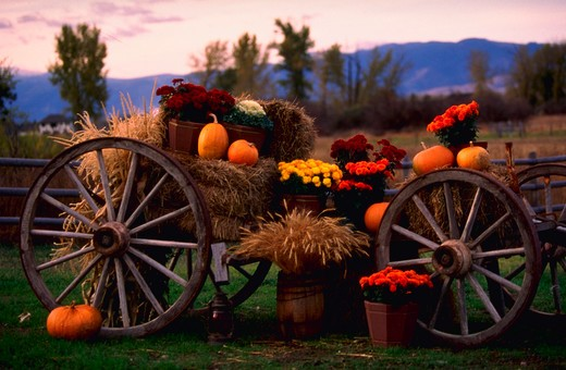 Horse wagon with pumpkins, flowers and hay decorated for fall in Missoula, Montana. : Stock Photo