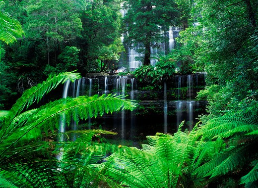 Russel Falls and Creek in Tasmania rainforest : Stock Photo