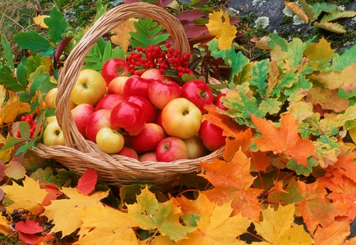 Apples in basket on fallen autumn leaves : Stock Photo