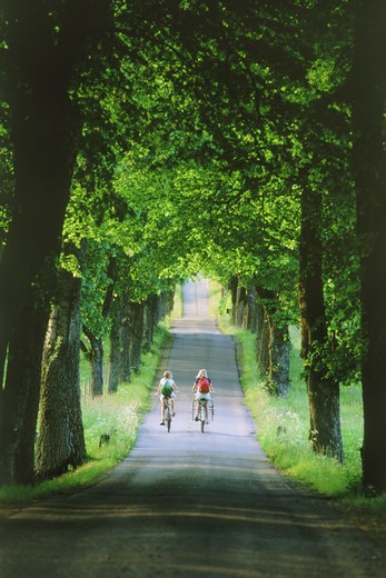 Two girls with bicycles and backpacks riding to school on tree-lined country road in Sweden : Stock Photo