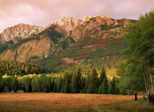 Stock Photo: 4286-28780 Walls and peaks of Canadian Rockies near Banff with aspen and fir trees turning color