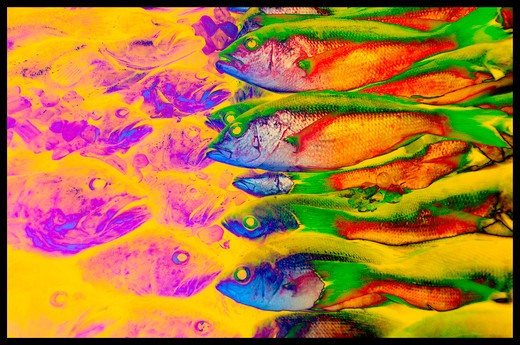 Graphic image of colorful fish. : Stock Photo