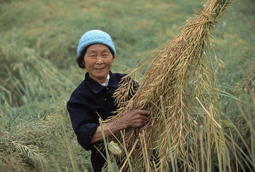 Stock Photo: 4286-32848 A Ba farmer holds canola plants for harvest near Wanxian China