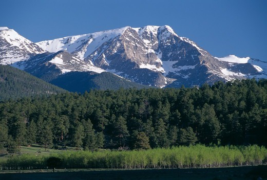 Snowcapped Mt Ypsilon from Moraine Park, Rocky Mtn Nat'l Park, CO : Stock Photo