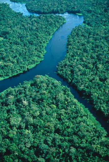 Stock Photo: 4286-35262 Amazon estuary region