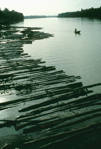 Marajo Island: raft of logs near sawmill : Stock Photo