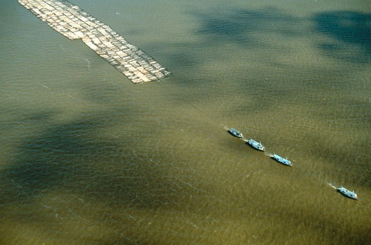 Stock Photo: 4286-35271 Aerial view of raft of logs, Lower Amazon, Brazil.