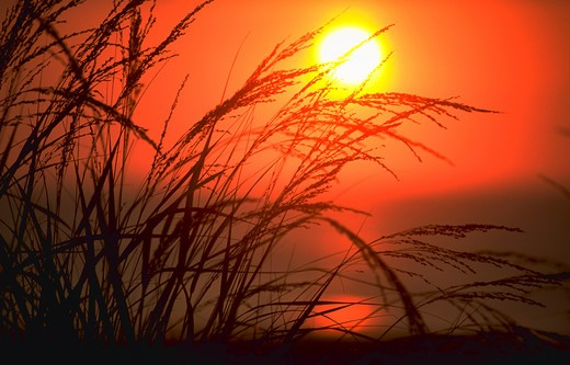 Sunrise along the Atlantic coast.  Shot through dune grass, showing full sun and ocean.  (Nature.  Sunrise.  Water Series.  Concepts.) : Stock Photo