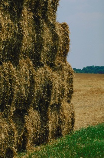 Stock Photo: 4286-35759 Hay, in bales, in a farm field in the state of Delaware.  (Agriculture.  Farming.  Landscapes.)