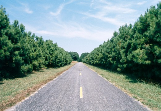 Stock Photo: 4286-35784 Road, disappearing into the distance.  Very symmetrical.  Variations available. (Concept. The journey. Travel. American landscape.)