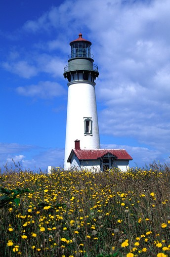 Stock Photo: 4286-36257 Historic Yaquina Head Lighthouse tower over a field of flowers in Oregon.