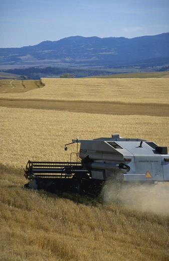 Stock Photo: 4286-41712 wheat harvest, ID