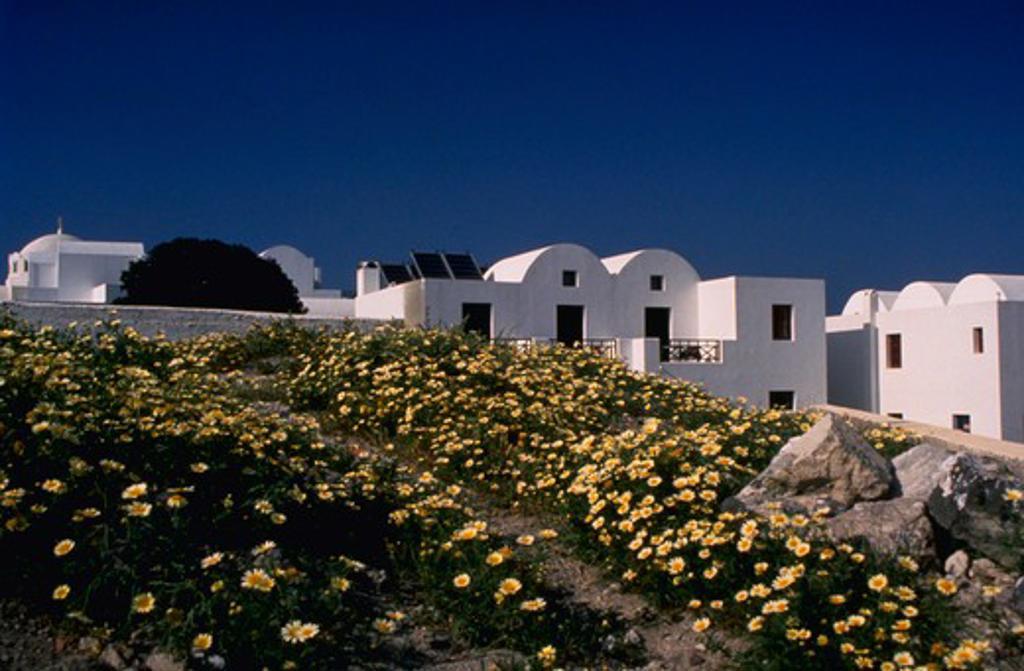 Stock Photo: 4286-44079 SANTORINI GREEK HOMES WITH DAISY FIELDS