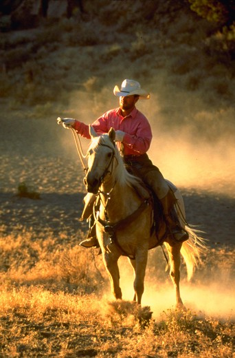 Stock Photo: 4286-54454 Cowboy on horseback getting ready to rope