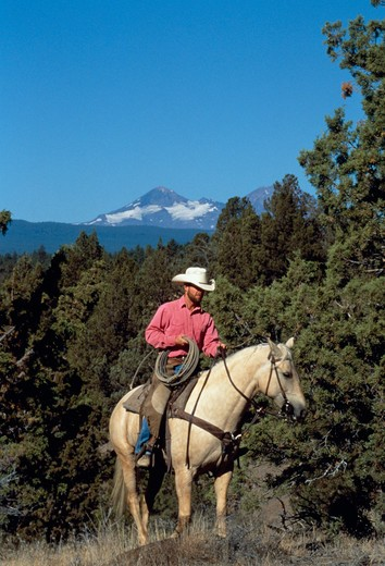 Stock Photo: 4286-54469 Wrangler on horseback on hillside with snow-capped mountain in background