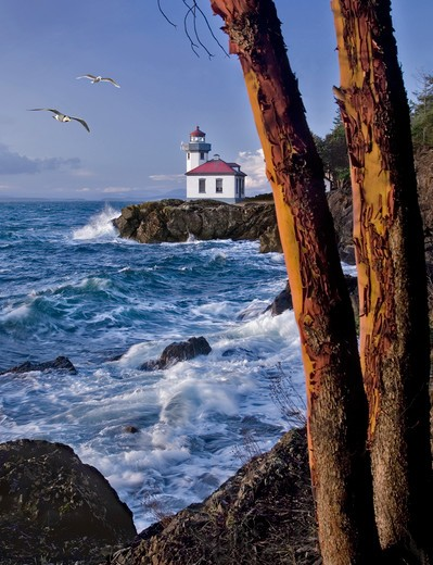 Distant daytime view past two trees of a lighthouse with water crashing against the rocky shore. : Stock Photo