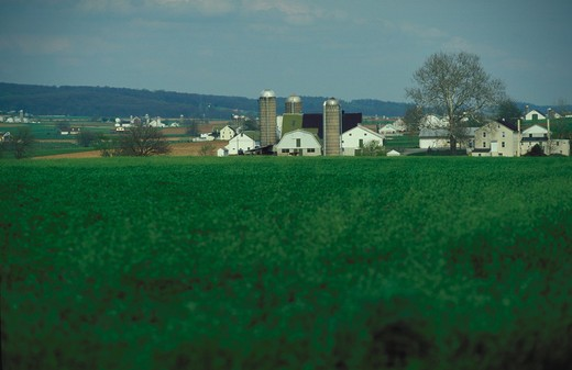 Stock Photo: 4286-56457 View across a lush green field at several farms in Amish Country.
