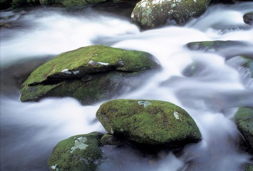 Spring time rains flow past moss covered rocks along Roaring Fork in Great Smoky Mountains National Park, Gaitlingburg, Tennessee : Stock Photo