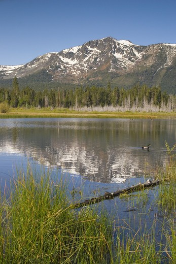 A snowy Mount Tallac in a reflecting pool near Lake Tahoe in California : Stock Photo