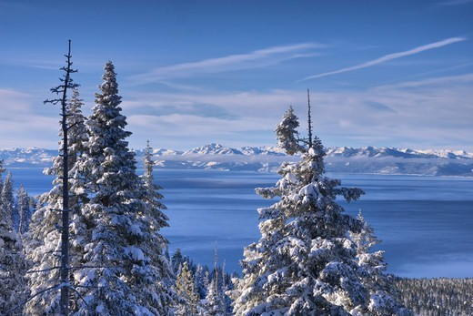 HDR tone mapped A view of Lake Tahoe California with snowy trees in the morning after a winter storm : Stock Photo