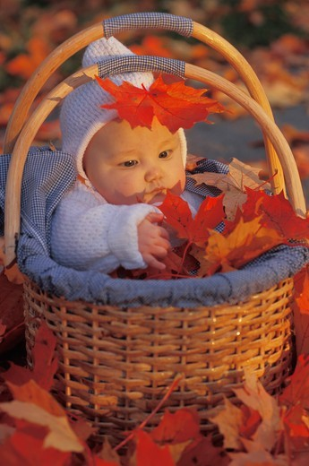Stock Photo: 4286-75434 Baby in basket amid colorful autumn leaves