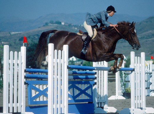 Stock Photo: 4286-76791 Horse jumping barrier during equestrian competition