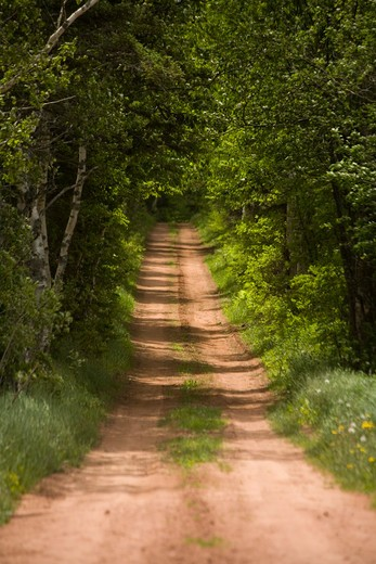 Red clay country lane surrounded by trees, Prince Edward Island, Canada : Stock Photo
