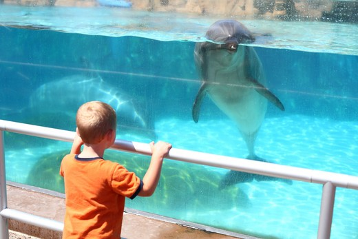 Stock Photo: 4286-77561 Young boy looking at dolphin in aquarium