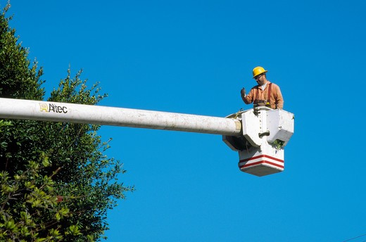Directing the relocation of platform during tree removal operation in Westchester, California : Stock Photo