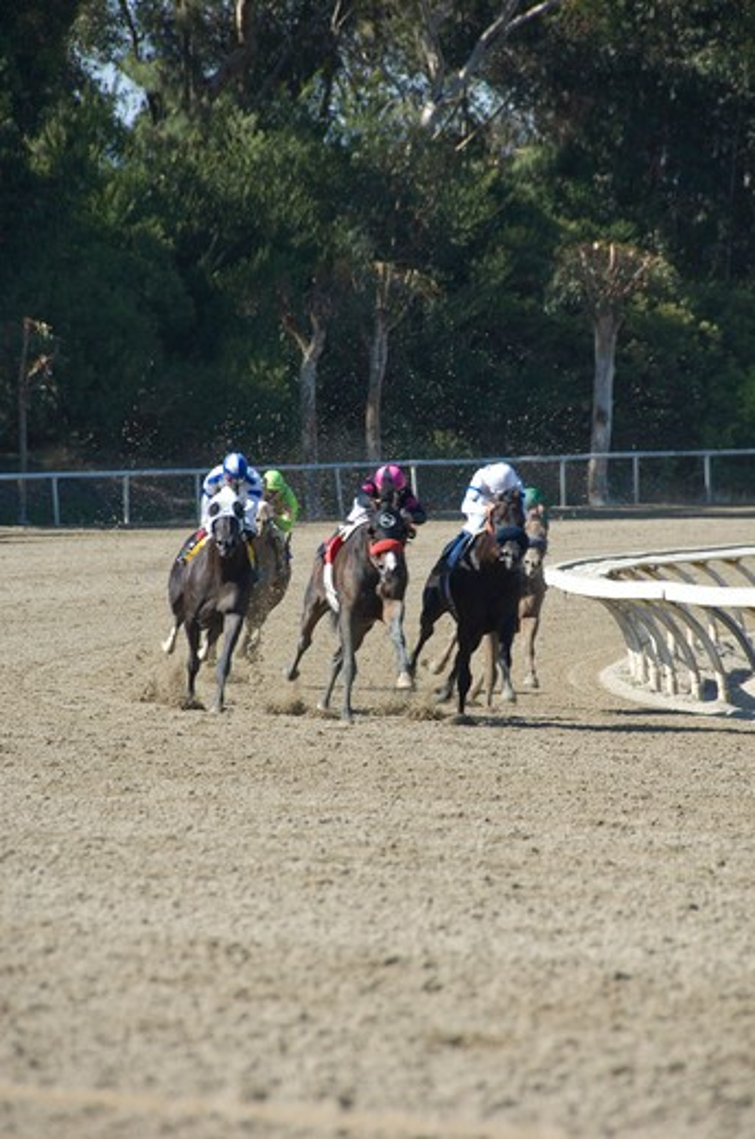 Stock Photo: 4286-84249 Horse racing at Hollywood Park California.