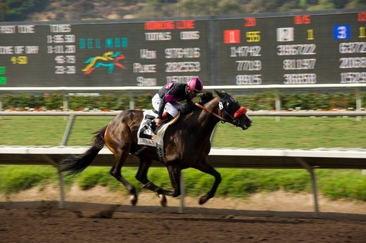 Stock Photo: 4286-84301 Lava Man winning at Del Mar race Track in California.