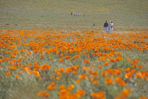 people walking Antelope Valley Poppy Preserve California : Stock Photo