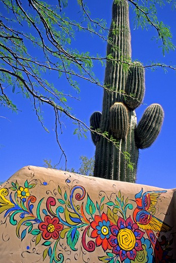 Stock Photo: 4286-84744 Colorful painted adobe wall and saquaro cactus Scottsdale near Phoenix Arizona
