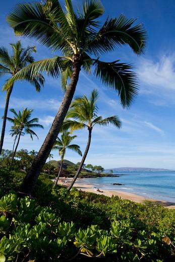 Stock Photo: 4286-87293 Maluaka Beach, Makena, Maui, Hawaii