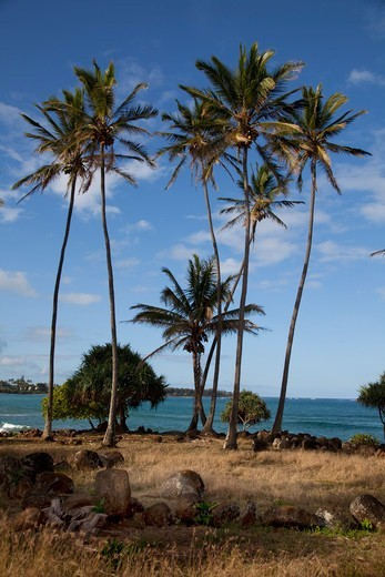 Stock Photo: 4286-87548 Wailua River State Beach Park, Kauai, Hawaii