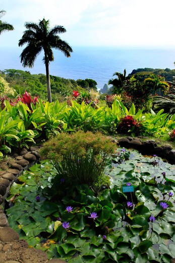 Garden of Eden, botanical garden, Hana Coast,  : Stock Photo