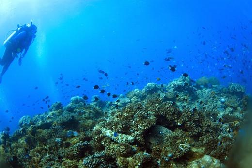 Scuba diving, Fiji : Stock Photo