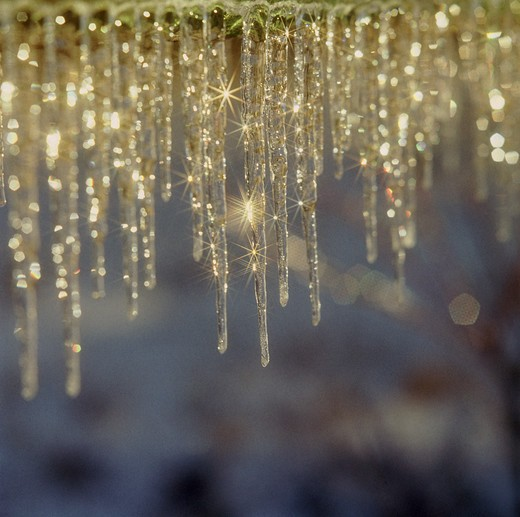 Close-up of icicles  : Stock Photo