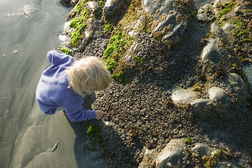 Stock Photo: 4286R-10954 Exploring tide pools. Roller Bay. Hope Island. British Columbia, Canada.