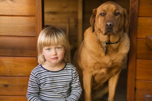 Caucasian girl 3 years old with labrador dog. .  MR-0501 PR-0504 PR-0505 : Stock Photo