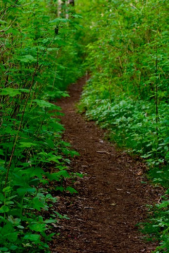 Stock Photo: 4286R-13427 Small forest trail leading through the undergrowth, Port Coquitlam, BC, Canada
