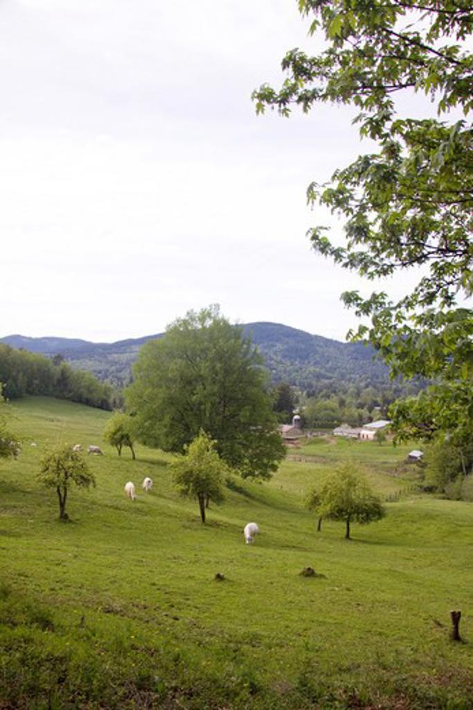 Stock Photo: 4286R-13843 Hillside dairy farm in Mission, BC, Canada