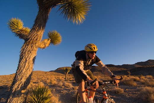 Stock Photo: 4286R-15629 A biker riding by a Joshua Tree at sunset near Lone Pine in California